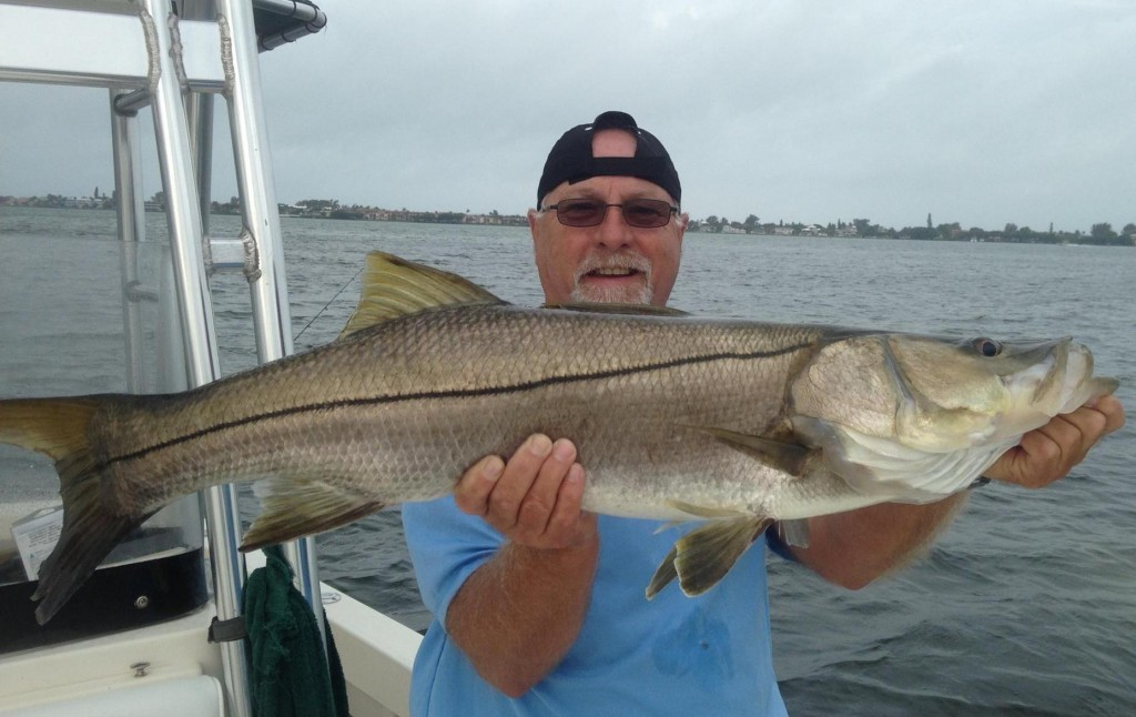Tampa Bay Snook